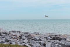 Seagull over Lake Michigan, Wisconsin stock photo