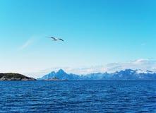 Seagull over Norwegian sea. Summer, sunday Royalty Free Stock Image