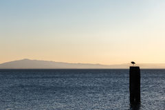 A seagull over a pole on a lake, with distant hills in the backg Royalty Free Stock Photos