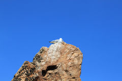 Seagull over a rock in a clear day. In summer Stock Image