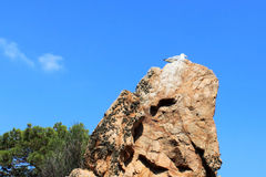 Seagull over a rock. In summer Royalty Free Stock Image