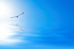 Seagull over the sea Royalty Free Stock Images