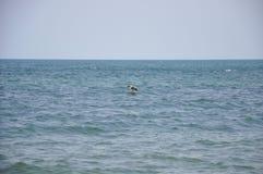 Seagull over the sea Stock Photos