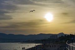 Seagull over the sea Stock Image