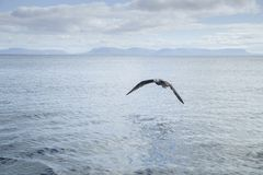 Seagull over the sea Royalty Free Stock Photos