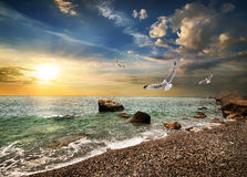 Seagull over sea. Seagull over the sea in the mountains Stock Images