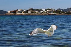 Seagull over the sea with town in background royalty free stock photography