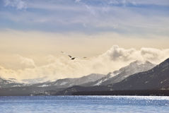 Seagull over Tahoe Royalty Free Stock Image