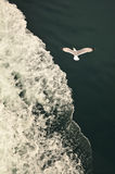 Seagull over the waves Royalty Free Stock Image
