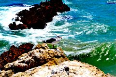 Seagull overlooking the ocean. A view of a rocky seaside in malibu california as the waves crash below Royalty Free Stock Photos
