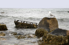 Seagull Overlooking Wreck. A small boat wreck offshore on Block Island Rhode Island, with a seagull looking on Royalty Free Stock Photo