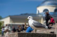 Seagull på bakgrunden av folk på en stege Fotografering för Bildbyråer