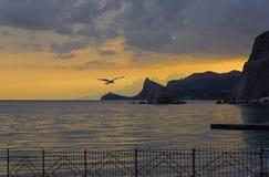 Seagull på bakgrunden av inställningssolen crimea arkivbild
