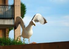 Seagull på balkongen Arkivbild