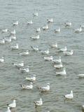 Seagull på Bangpu rekreation, Samut Prakarn, THAILAND Royaltyfria Foton
