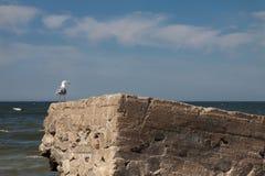 Seagull på betongen arkivfoto