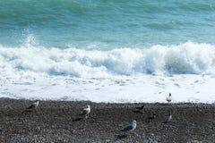 Seagull på Blacket Sea Arkivbild