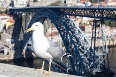 Seagull på den Douro floden och Ribeira från tak på Vila Nova de Gaia, Porto, Portugal Arkivfoton