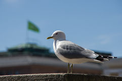 Seagull på en bakgrund av den gröna flaggan Arkivfoton