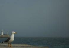 Seagull på en bakgrund av en fyr Arkivfoton