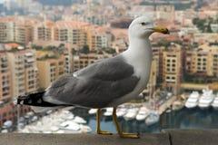 Seagull på en bakgrund av lyxiga Monaco Royaltyfri Foto