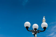 Seagull på en gatalykta Royaltyfri Bild