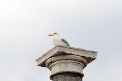 Seagull på en kolonn Arkivfoto