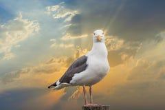 Seagull på en pylon på stranden royaltyfri bild