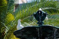 Seagull på en springbrunn Fotografering för Bildbyråer