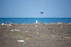 Seagull på en strand, ekologisk katastrof, utplåning av fåglar, na Arkivfoto