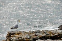 Seagull på en vagga royaltyfri foto