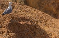 Seagull på en vagga arkivfoton