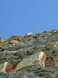 Seagull på en vagga Sommar August South Ozereyevka, Novorossiysk, Ryssland Arkivbilder