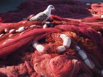Seagull på ett fisknät Royaltyfri Bild