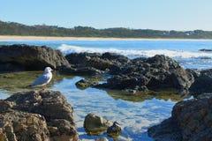 Seagull på ett nautiskt tema för vagga arkivfoton