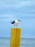 Seagull på ett träställe Royaltyfri Foto