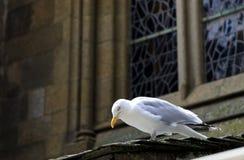 Seagull på förutom en kyrka arkivfoton