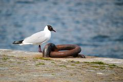 Seagull på hamnen royaltyfri fotografi