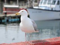 Seagull på hamnplatsen Royaltyfri Fotografi