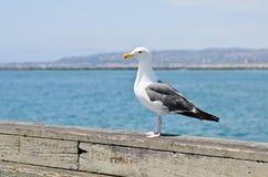 Seagull på havet Arkivbild