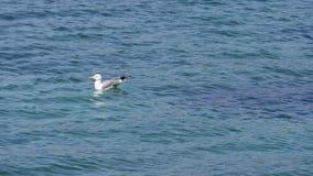 Seagull på havet Arkivfoton