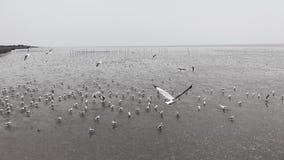 Seagull på havet Thailand Arkivfoto
