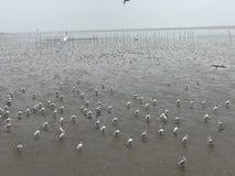 Seagull på havet Thailand Royaltyfri Bild
