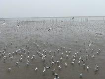 Seagull på havet Thailand Arkivbilder