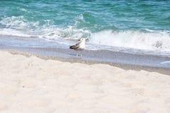 Seagull på kanten av bränningen royaltyfri fotografi