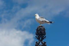 Seagull på kronan i Helsingfors Finland Royaltyfria Bilder