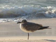 Seagull på kusten Royaltyfria Foton