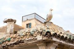 Seagull på moroccan byggnad Arkivfoton