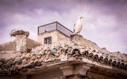 Seagull på moroccan byggnad Fotografering för Bildbyråer