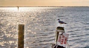 Seagull på Pier Overlooking Shimmering Sea Arkivfoton
